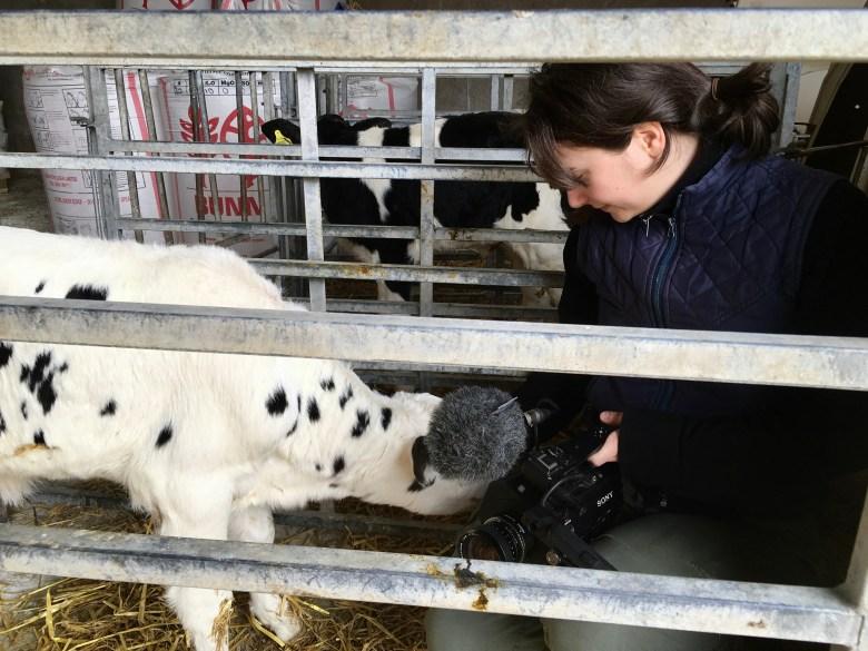 """""""Cow"""" cinematographer Magda Kowalczyk"""