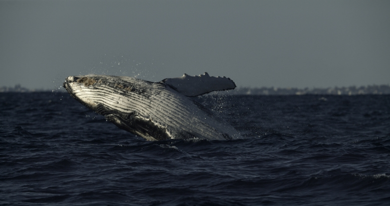 """""""Secrets of the Whales"""""""